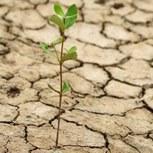 Quid de la sécheresse après les pluies de cet hiver ?